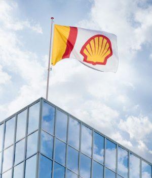 Shell pecten flag, 2016