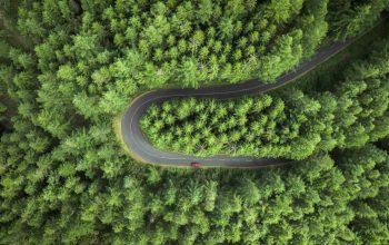 Vista aérea de una carretera sinuosa que atraviesa una zona boscosa